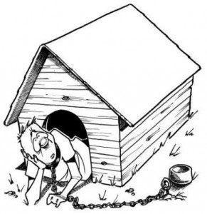 Anti Dog House